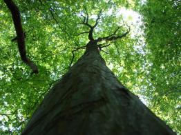 arbre en contre-plongée