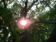 soleil dans les arbres
