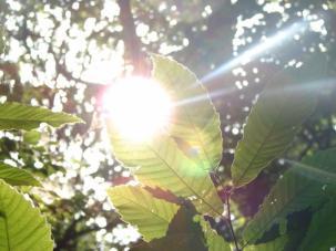 soleil dans une feuille