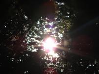 soleil derrière des feuilles