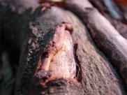 détail de tronc d'arbre