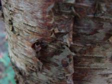 tronc d'arbre
