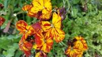 fleurs rouges et jaunes