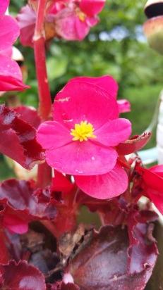 fleur 4