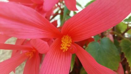 fleur 5