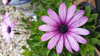 fleur 7