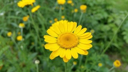 fleur 8