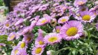 fleurs 10