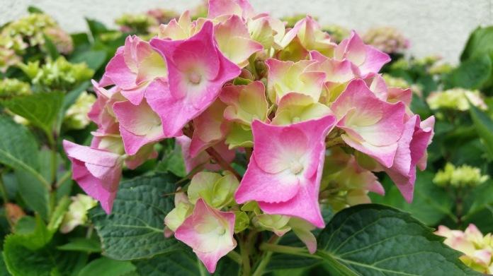 fleurs 11