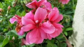 fleurs 13