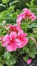 fleurs 14