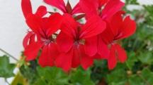fleurs 15