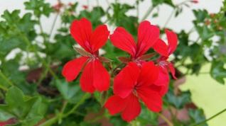 fleurs 16