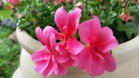 fleurs 17