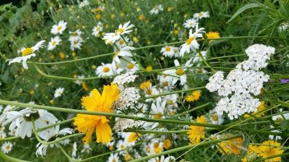 fleurs 19