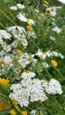 fleurs 20