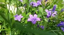 fleurs 21