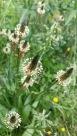 fleurs 4