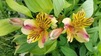 fleurs 7