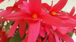 fleurs 8