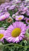 fleurs 9